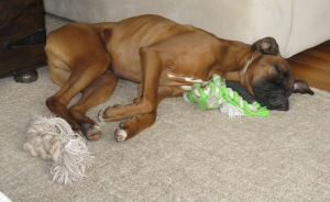 playing with toys can be very exhausting...