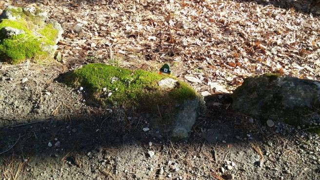 151-55-Finney behind rock